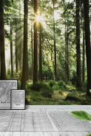 90 best forest wall murals images on pinterest forest light wall mural wallpaper