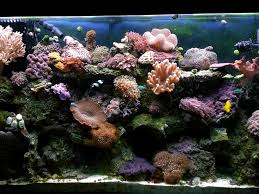 Live Rock Aquascaping Ideas Aquascaping And Water Circulation Saltwaterfish Com Forum