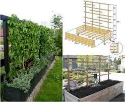 gartengestaltung sichtschutz welche pflanzen als sichtschutz für garten und terrasse