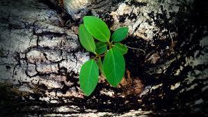 small plant on a big tree by jannekloeffler on deviantart