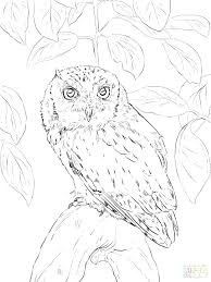coloring page for adults owl detailed owl colouring pages coloring page snowy high illustration