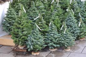 real christmas trees at home depot christmas lights decoration