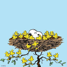 25 snoopy woodstock ideas snoopy snoopy