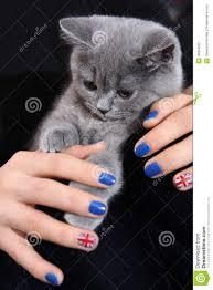 British Flag Nails British Shorthair Small Cat And Union Jack Flag Stock Photo