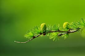 free images nature grass branch leaf seed flower botany