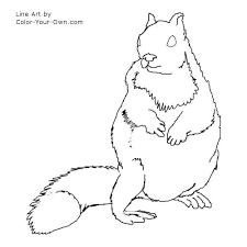 wildlife ground squirrel coloring