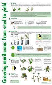 leaf discoloration u2026 cannabis hemp cbd pinterest