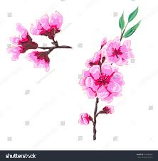 hand drawn peach blossom vector stock vector 313183418 shutterstock