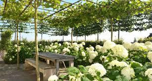 tuinidee schaduw boven het terras dmv dakplantanen donker u0026 wit