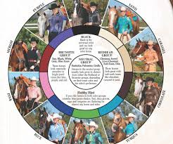 frantic horse color chart on pinterest markings horses and akhal