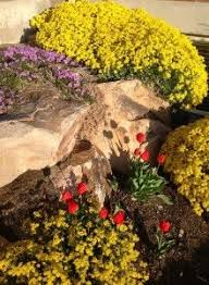 117 best drought tolerant rock garden plants images on pinterest