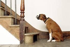 boxer dog training tips tips for training your dog