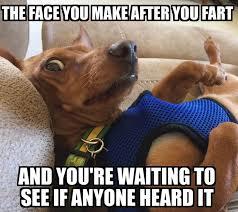 Wiener Dog Meme - 62 best dachshund memes and wiener dog humor images on pinterest
