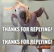 Parrot Meme - parrot reply weknowmemes generator