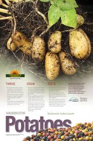 Spanish Root Vegetables - wa harvest posters