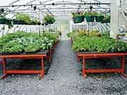 Metal Greenhouse Benches Greenhouse Benches Sale Gothic Arch Greenhouse