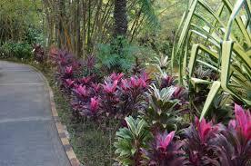 Fowers Fowers Picture Of Jardin Botanique De Deshaies Deshaies