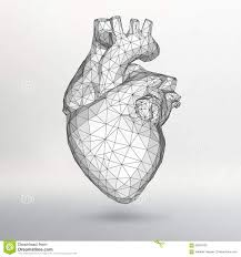 drawing the human heart on a red background with stock vector