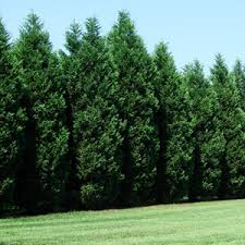 oregon trees for sale fast growing trees