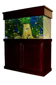 dallas aquarium experts aquarium service aquarium leasing