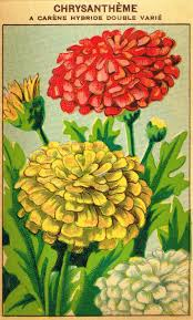 flower seed packets antique farmhouse seed packet prints knick of time