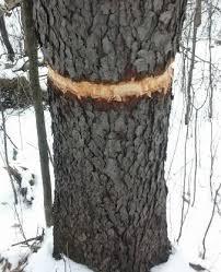 target reston black friday vandals target trees in popular eagan park eagan mn patch