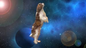 Meme Space - apollo the dog travels through space time shooting stars meme