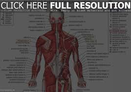 Anatomy Of Human Back Muscles Human Back Muscles And Bones Anatomy Of The Lower Back Loopele
