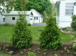 Small Shrubs For Front Yard - my favorite shrubs u0026 bushes for the philadelphia area newtown