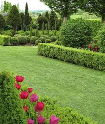 41 incredible garden hedge ideas for your yard photos