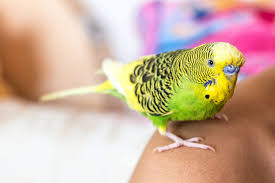 how much does it cost to buy a lamborghini aventador how much does it cost to buy and care for a pet bird