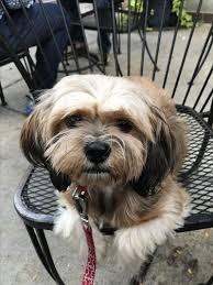 Indigo Dog House Dog Friendly Chicago Il