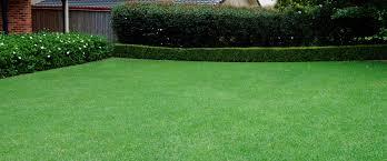 garden maintenance landscaping companies in uae dubai