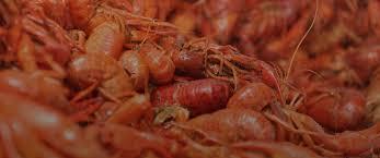 crawfish catering houston crawfish catering dallas heads or tails cajun crawfish best