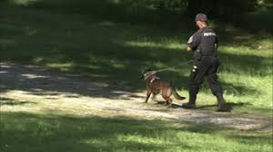 belgian shepherd killed photos man shot killed by son in lithonia 11alive com