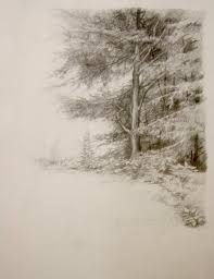 pine tree study 9 x 12 pencil kegler drawing inspiration
