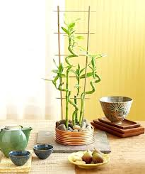 Indoor Vertical Gardening - indoor vertical garden containers indoor bamboo plant container