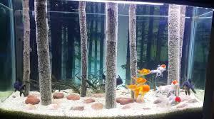 Aquarium For Home Decoration The World U0027s Most Beautiful Home Aquarium For Oranda Goldfish