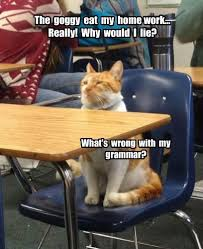 Homework Meme - lolcats homework lol at funny cat memes funny cat pictures