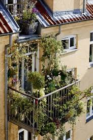 wã schespinne fã r balkon 374 best city garden images on plants landscaping and
