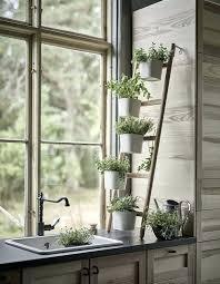 plante cuisine decoration cuisine plante de cuisine plante de plante de cuisine cuisines