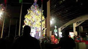 tms lights the biggest tree in texas nbc 5 dallas fort worth