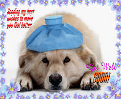 my get well ecard free get well soon ecards greeting cards