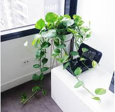 12 Best Plants That Can by 15 Beautiful House Plants That Can Actually Purify Your Home