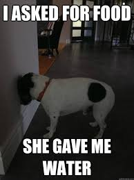 Annoyed Dog Meme - i asked for food she gave me water annoyed dog quickmeme