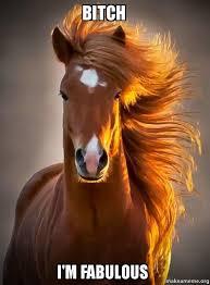 I Am Fabulous Meme - bitch i m fabulous ridiculously photogenic horse make a meme