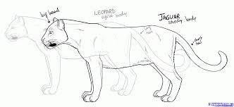 how to draw panthers black panthers step by step rainforest