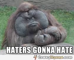 Funny Gorilla Memes - funniest gorilla showing the finger and having epic face odds and