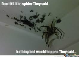 Spider Meme - spiders spider meme and humor