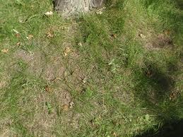 ants in turf yard and garden news university of minnesota